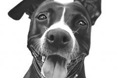 Hond broer Santana45a