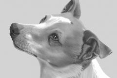 Hond1 - kopie45zz