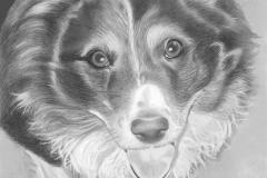 Hond Marc