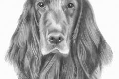 lieve-hond