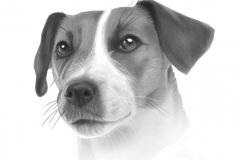 mooie hond145zlicht