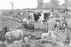 Koe en schapen137